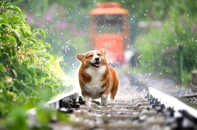 Köpeklerin Hayat Kalitemize Katkıları