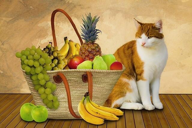 Kediler Ne Yer?  Kedilere Mama Dışında Ne Verilir?
