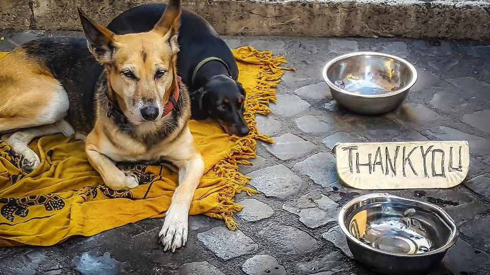 Sokak Hayvanlarını Beslemek