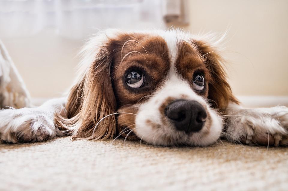 Köpekler Ne İster?